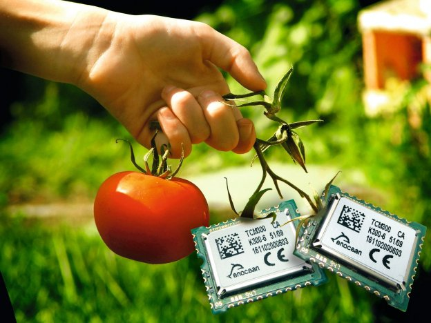 energy-harvesting_tomatoes_enocean-modules